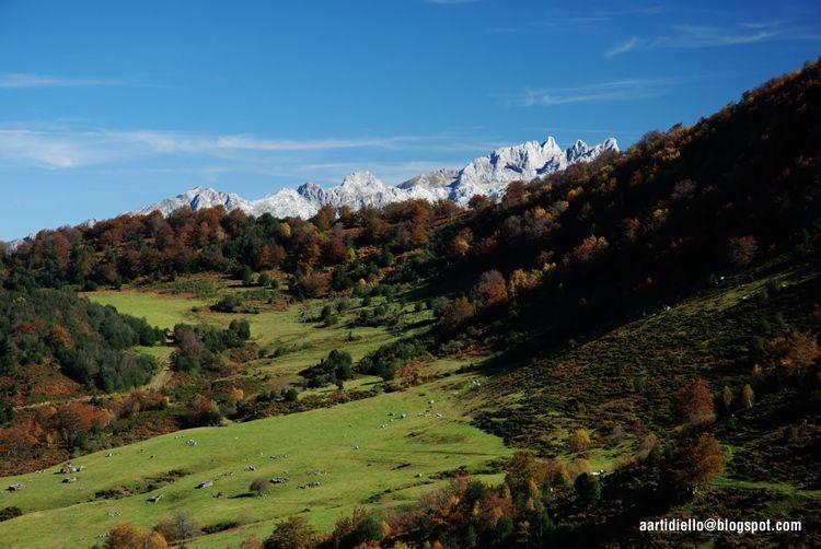 Le grand bois de hêtre du mont Peloño