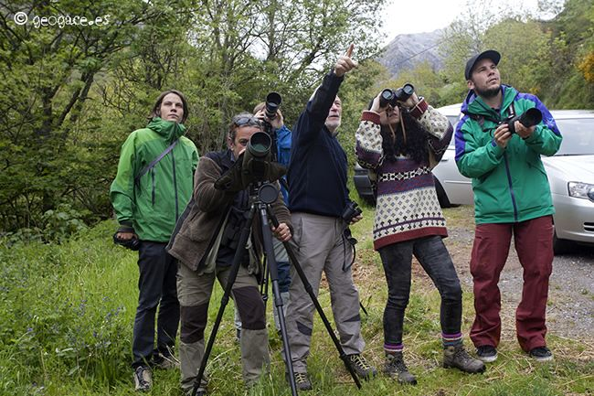 Spotting bears in Asturias