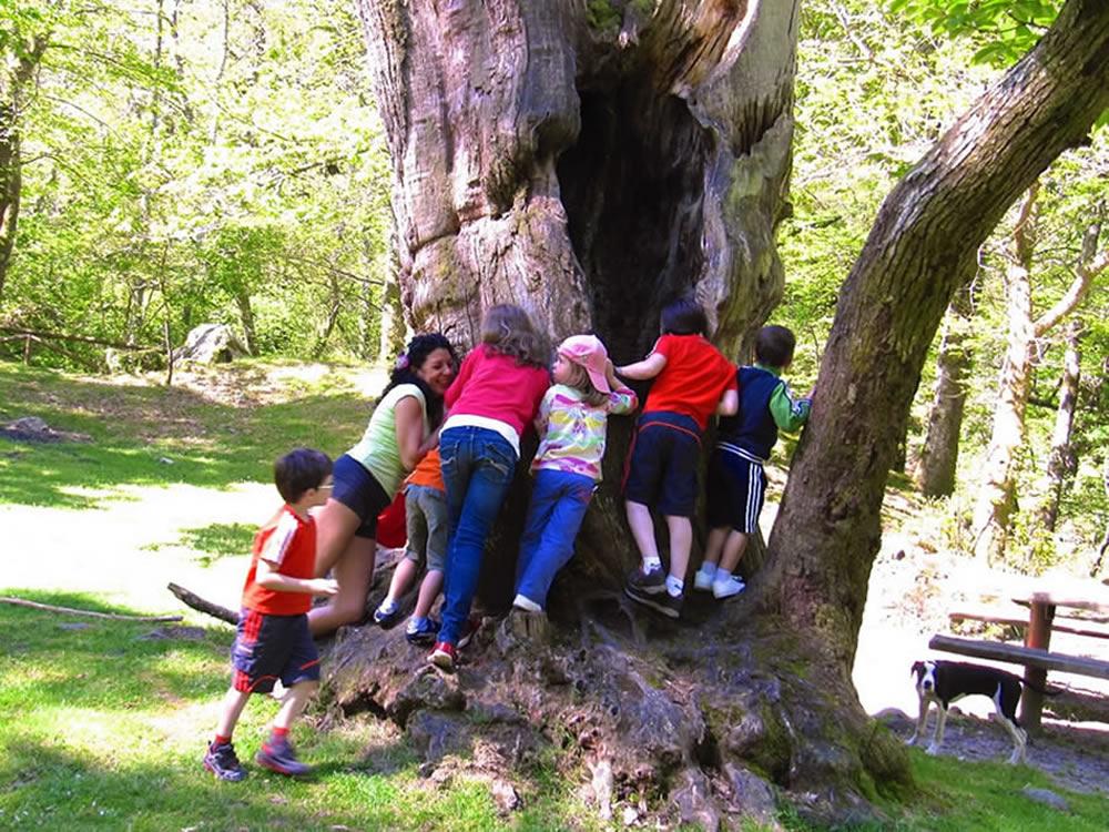 Asturias, Magic Land