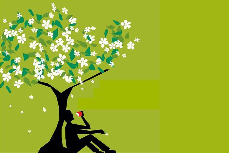 Apple Tree Bloom Week 2016